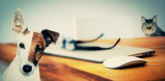 un perro en casa