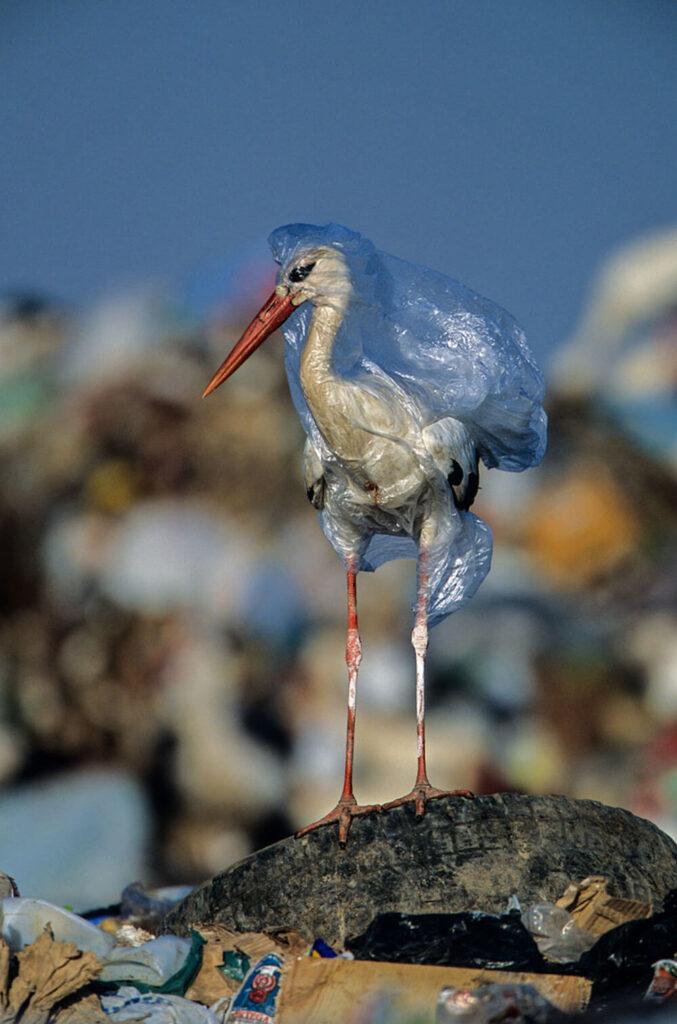 garza bosa de plástico
